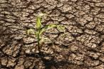 ONG 'aboga' por la agricultura Biointensiva para producir alimentos a la vez que regenerar el suelo en España