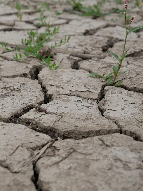 Día Mundial de Lucha contra la Desertificación y la Sequía 2021, tierras saludables para una mejor reconstrucción