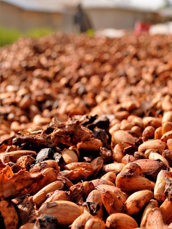 Cacao, café y soja 'victimas' del cambio climático