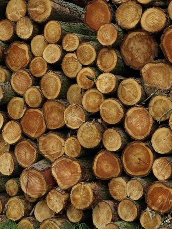 España lanza una herramienta para combatir el tráfico ilegal de madera