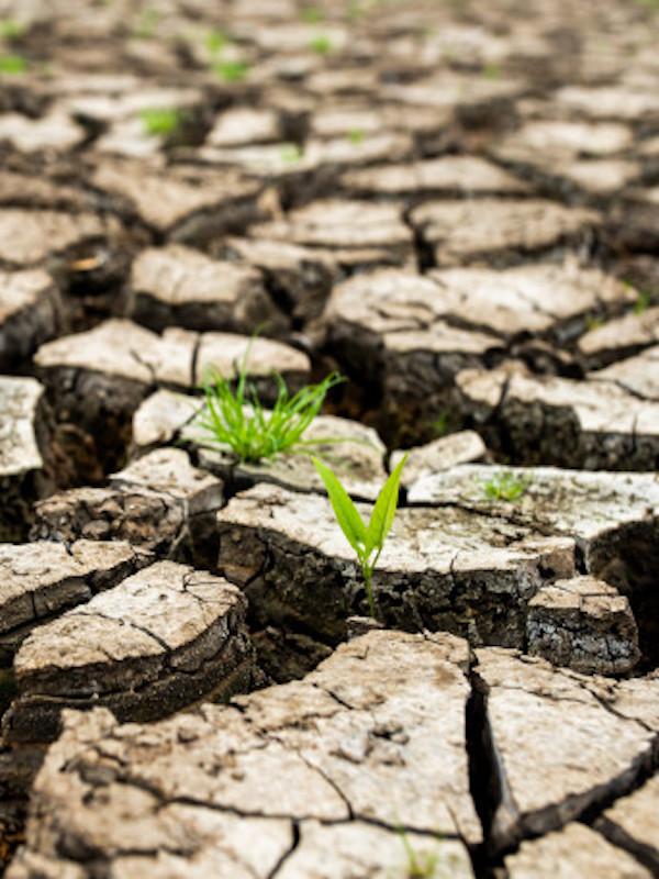 'Juicio del siglo por el Clima', lo vamos a ganar
