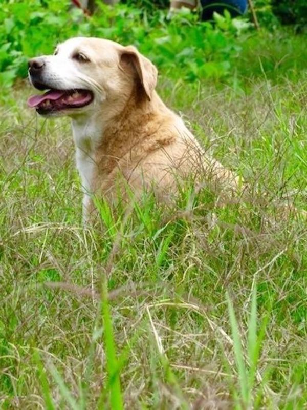 INTERcids y APDDA 'alianza' para mejorar la reforma del Código Civil en referencia a los animales