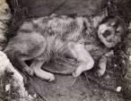 La mala vida de los primeros perros de trineo