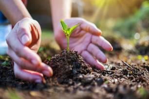 Objetivo cumplido. ProVeg apoyo oficialmente el 'Decenio de las Naciones Unidas para la Restauración de los Ecosistemas'