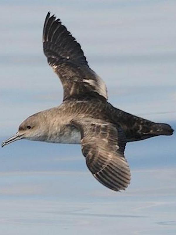 Proteger las aves marinas en alta mar es una imperiosa necesidad