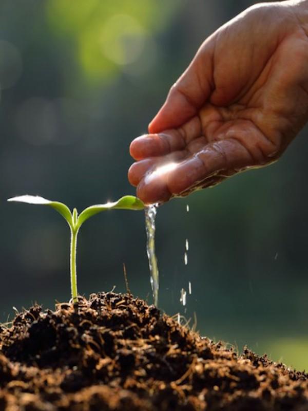 Col·lab busca startups innovadoras con impacto medioambiental