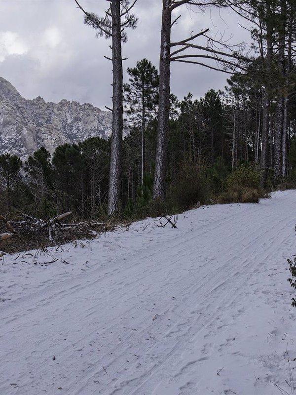 Hay que renaturalizar varias pistas de esquí en Navacerrada