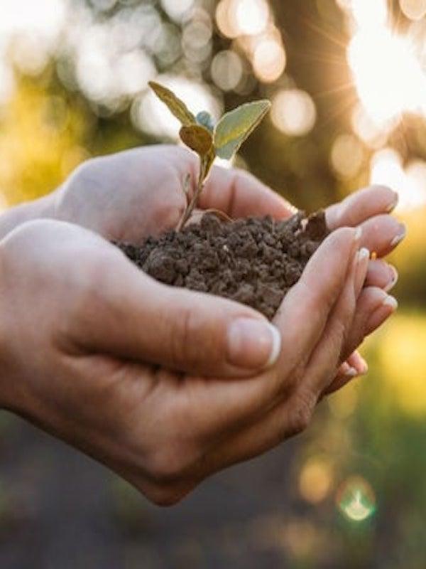 Proteger y conservar la naturaleza es más rentable que explotarla