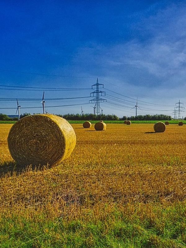 Agricultura regenerativa: es posible producir alimentos y contribuir a la salud del ambiente de América Latina y el Caribe