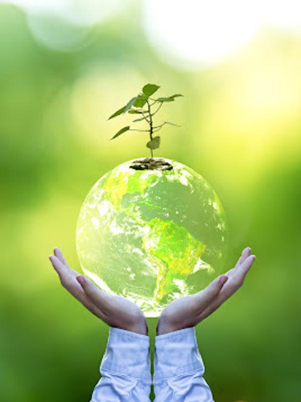Premios 'Medio Ambiente APROEMA'