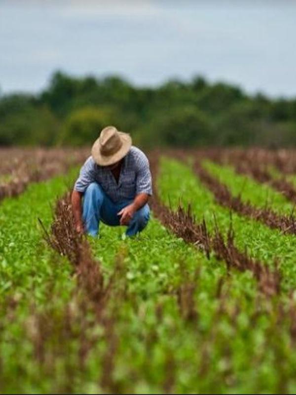 Los países del Caribe trabajan sostenidamente para aumentar la producción y reducir las importaciones de alimentos