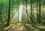 Celebrando el 'Día internacional de los bosques' en Baleares