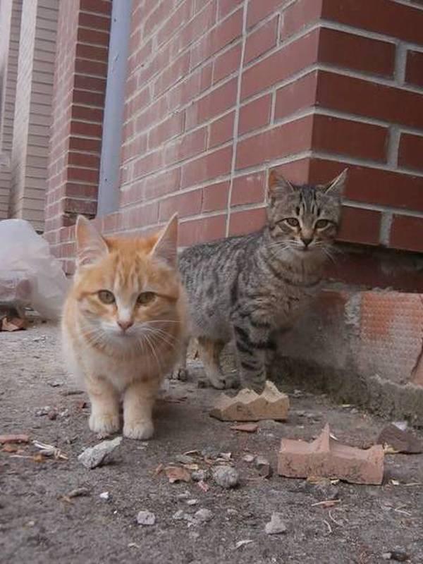Inaudito, Sant Josep de Sa Talaia (Ibiza) quiere dar 15.000 € a los cazadores para 'liquidar' los gatos del municipio