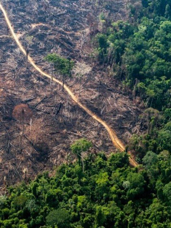 La campaña #LaMejorVacuna señala que hay que abordar la deforestación, y la destrucción de los ecosistemas