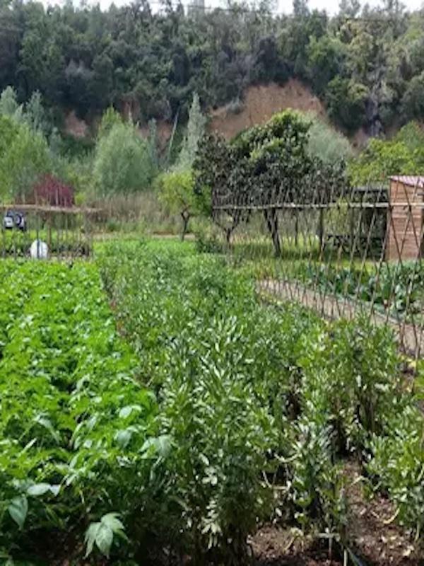 La oferta de productos ecológicos y km0 en la comunidad hortofrutícola de Consentio