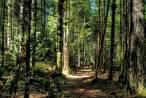 Bosques maduros, pequeñas vacunas contra el calentamiento global