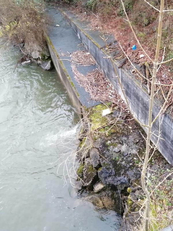 Asturias. No más obstáculos para que remonten los salmonidos en el Nalón-Caudal