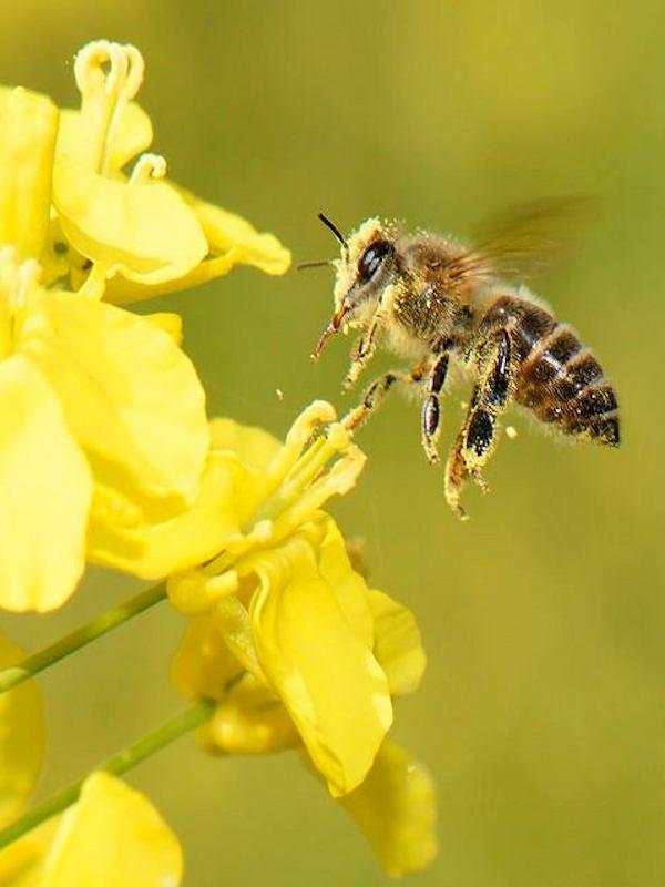 El polen se disparará esta primavera,  pero un verano 'remitira'