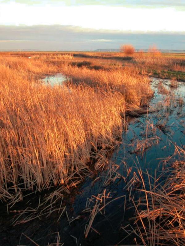 DÍA MUNDIAL DEL AGUA: 'Los humedales no pueden quedar fuera de la planificación hidrológica'