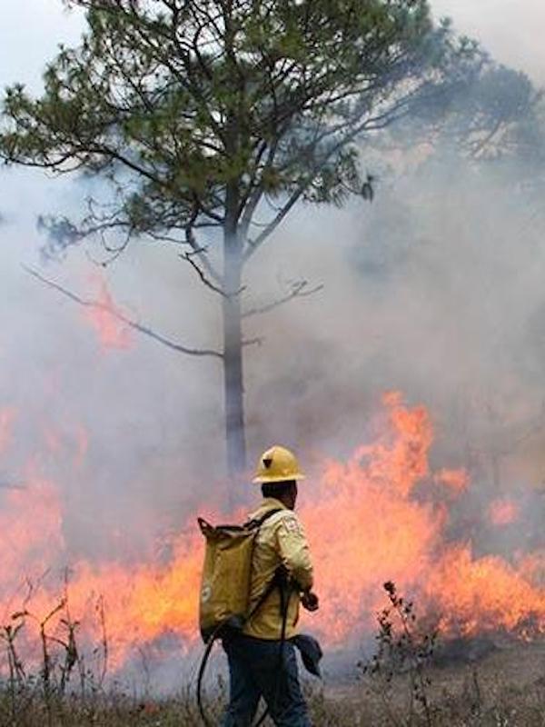 México presta atención incendios forestales en Arteaga y Santiago