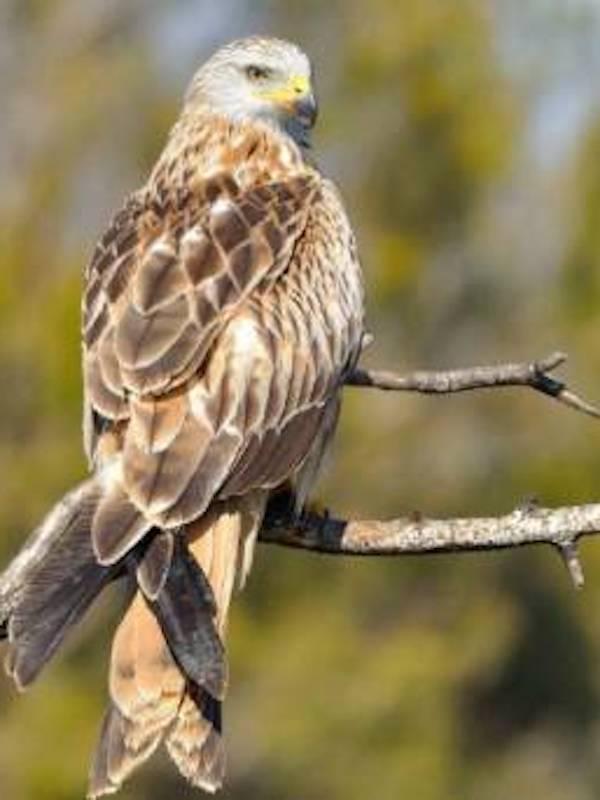 … y las aves en peligro de extinción?