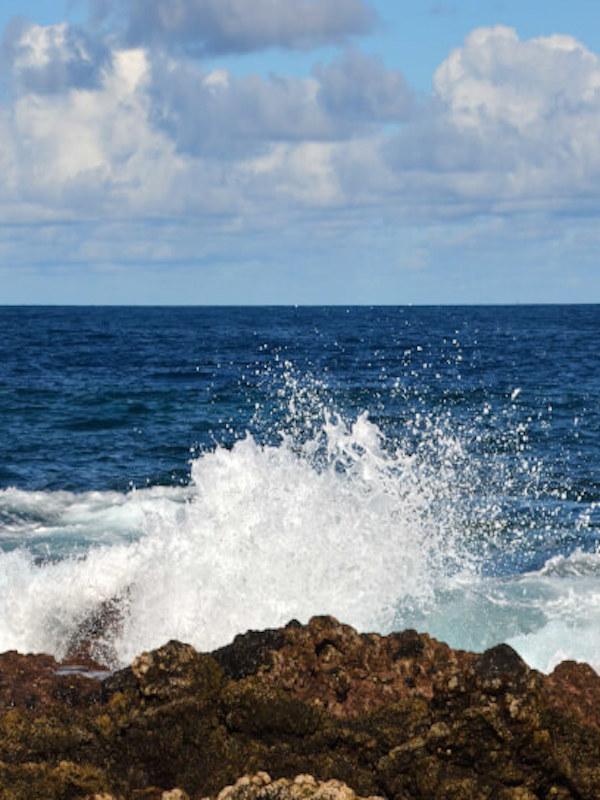 ¿Qué hay detrás de los ecosistemas acuáticos?