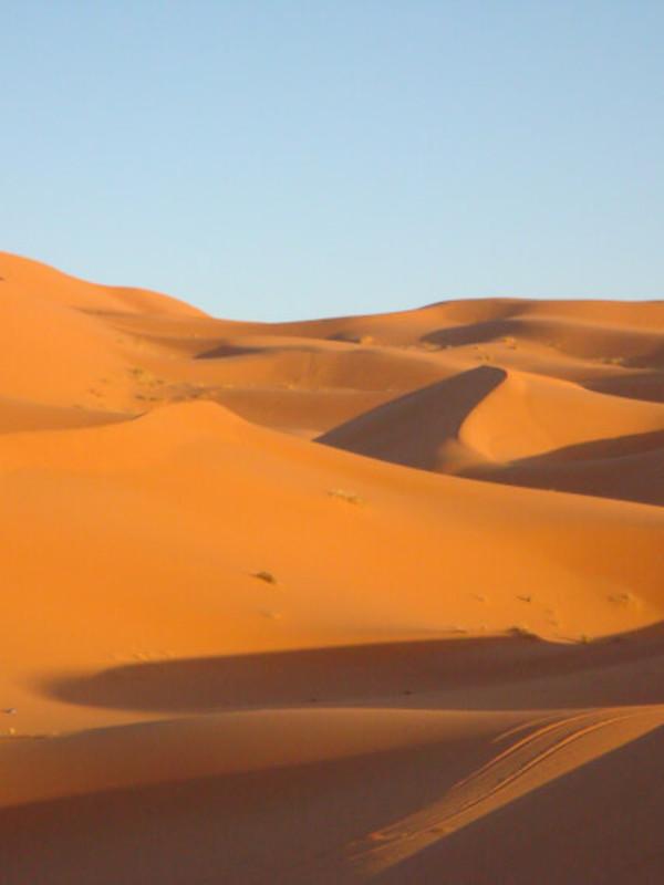 ¿Qué sabes de los animales del desierto?