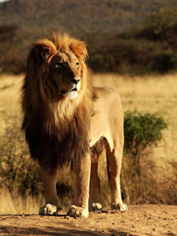 León, el gran desconocido