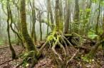 EccoFreight se suma al Día Internacional de los bosques con su proyecto EccoForest