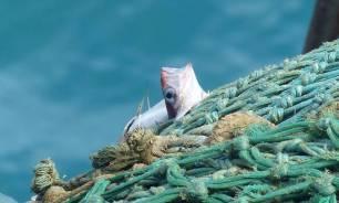 España no sabe que quiere ser de mayor, ¿líder en pesca sostenible o en sobrepesca?