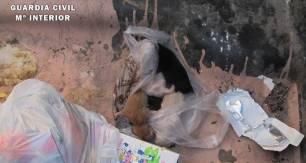 Investigan a una mujer de Vélez (Granada) tras arrojar cinco gatitos a la basura