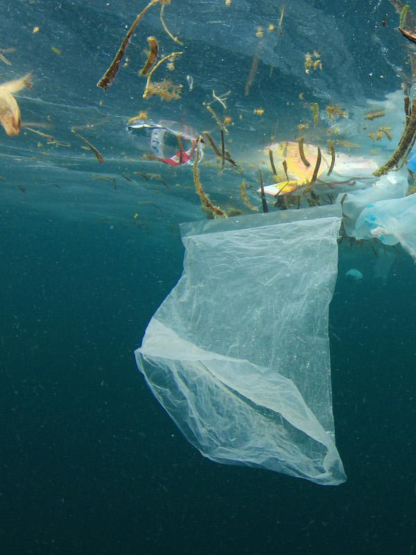 El Parlamento Europeo reclama medidas urgentes para reducir la basura marina