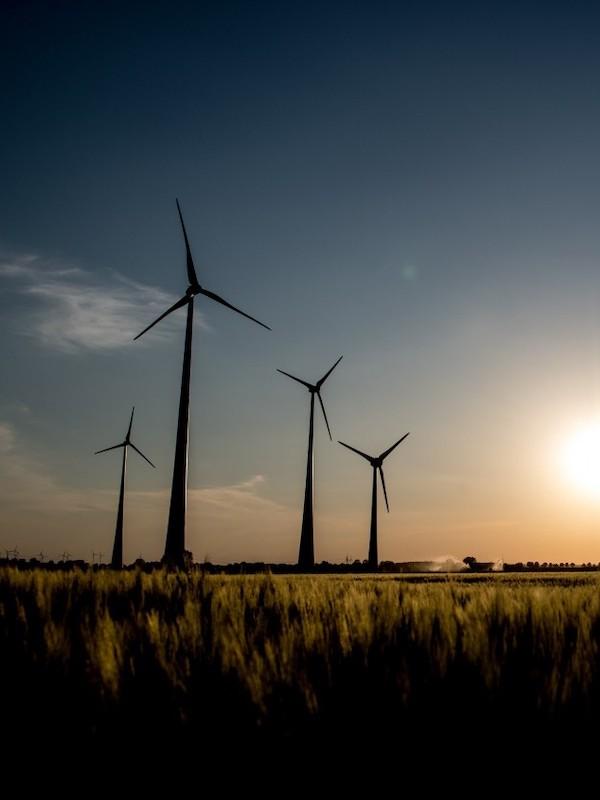 Reclamamos con Ecologistas en Acción y SEO/BirdLife enmiendas a la Ley de Cambio Climático que eviten que las energías renovables impacten negativamente en la biodiversidad