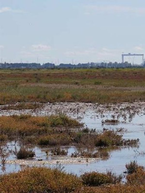 La Junta de Andalucía se opone a la ampliación del Parque Natural Bahía de Cádiz