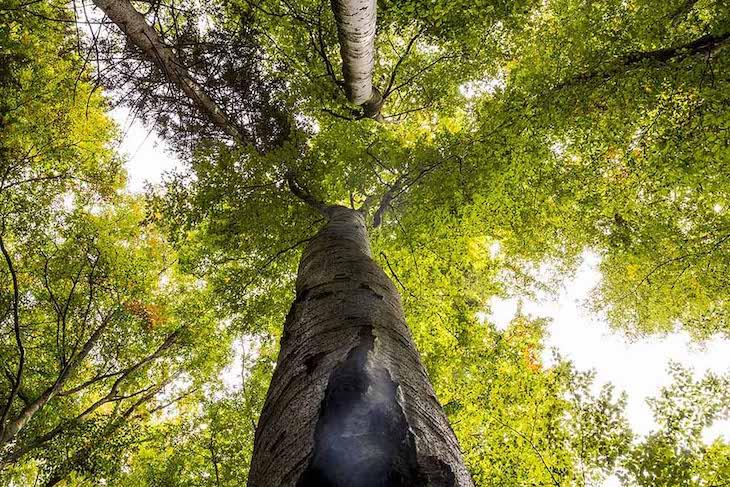 Adolfo Domínguez propone una moda sostenible con su nueva campaña 'Vístete de bosque'