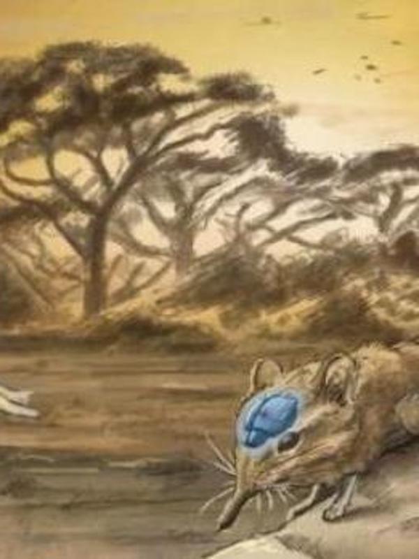 La inteligencia animal no evoluciona solo porque el cerebro crece