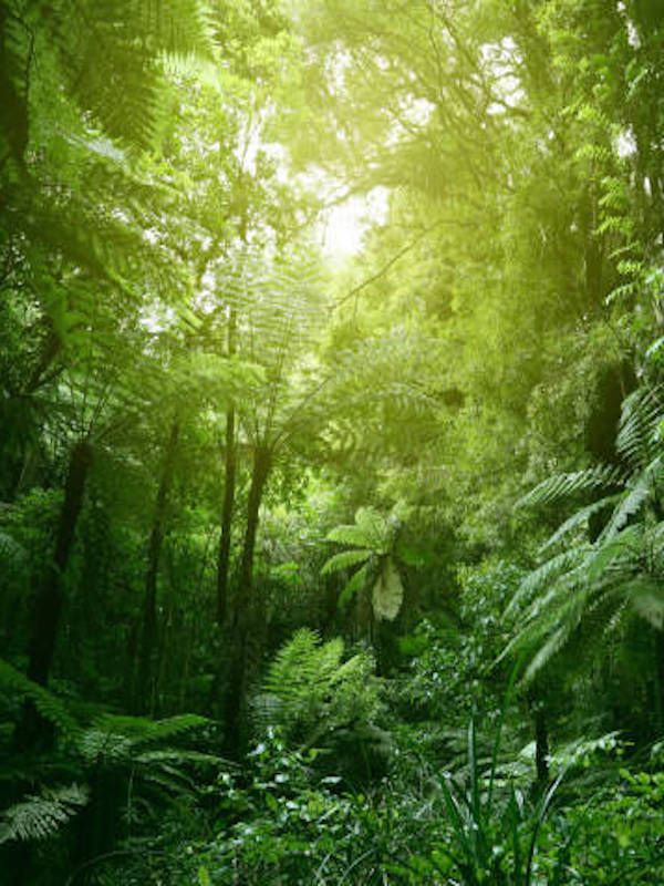 La evolución de la selva tropical