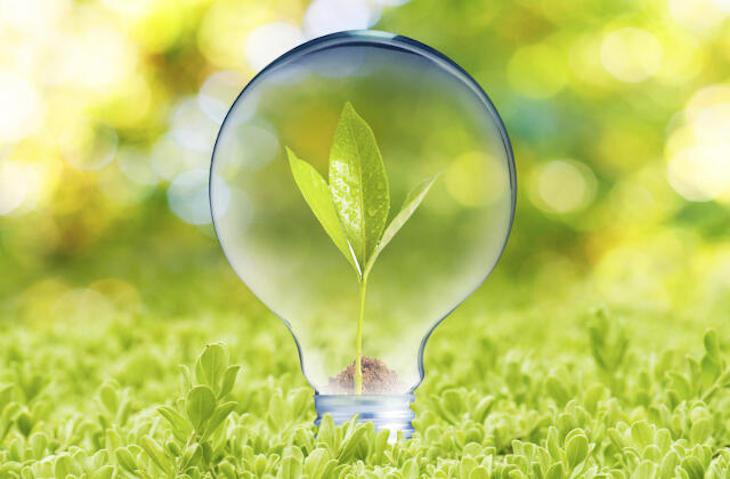 Tecnología verde que reduce la contaminación por micotoxinas de alimentos procedentes de cebada y trigo