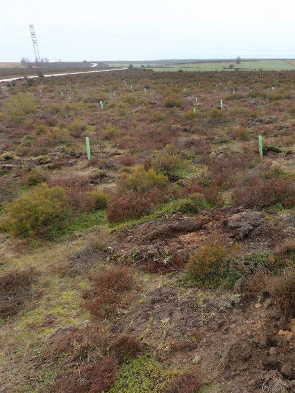 Miles de árboles plantados en La Zoma (Teruel) dentro del proyecto Archipiélago de Bosques