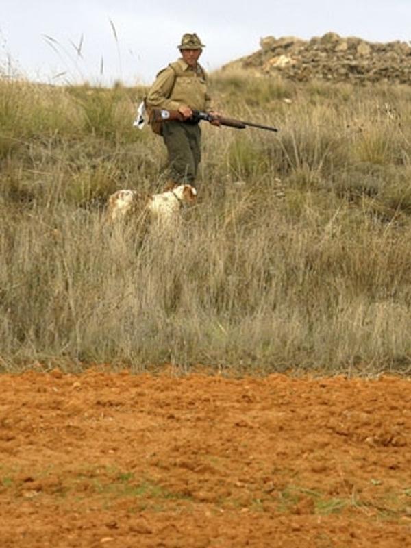 Castilla – La Mancha se niega a prohibir la caza del zorro