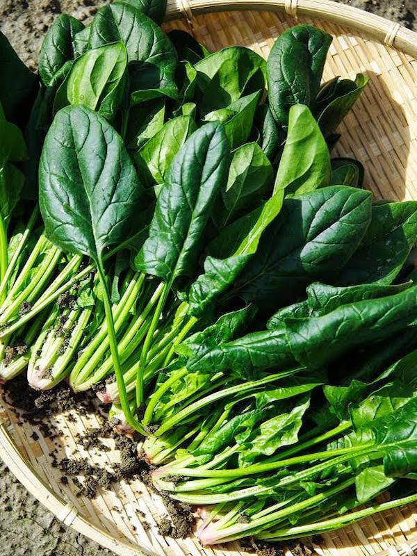 Espinaca ecológica: una verdura saludable para toda la familia