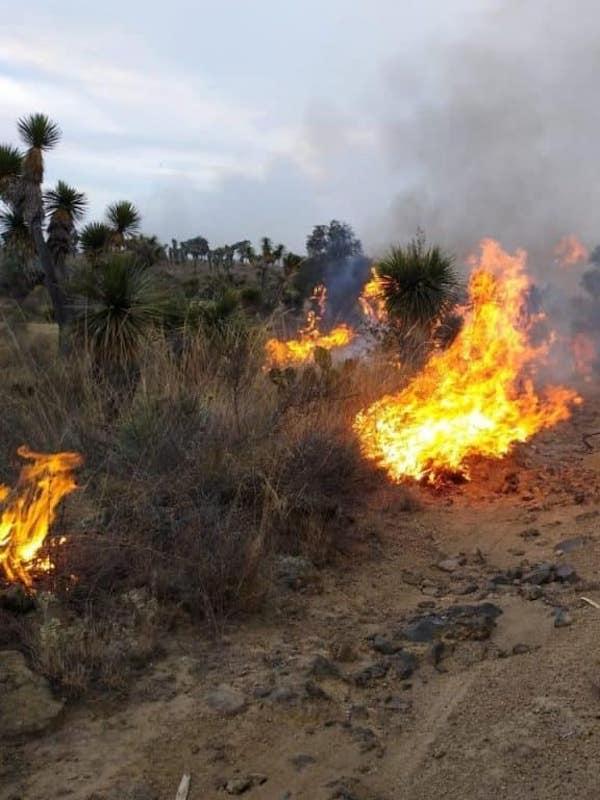 Acuerdan acciones para inhibir el uso del fuego en zonas forestales y agropecuarias de México
