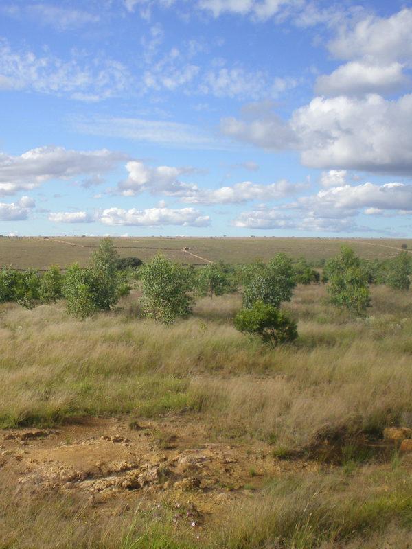 Investigan la cantidad de suelo fértil que produce la cubierta vegetal del olivar