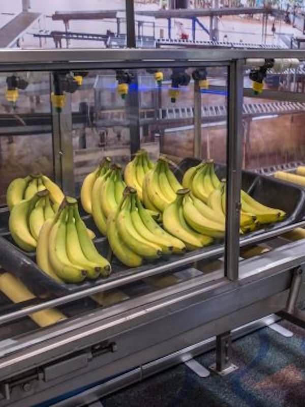 Los países andinos respaldan la Alianza Global contra la plaga del banano