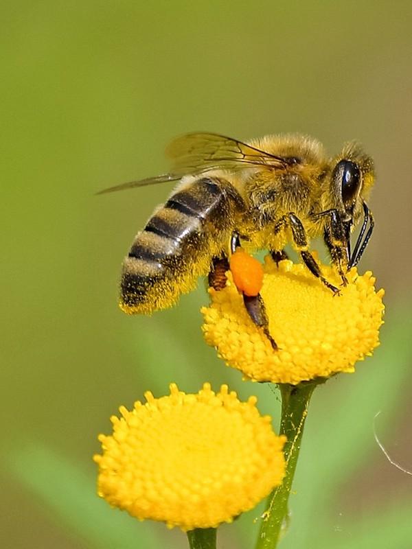 Interpreta Natura con la biodiversidad valenciana en el proyecto europeo Bee to Bee