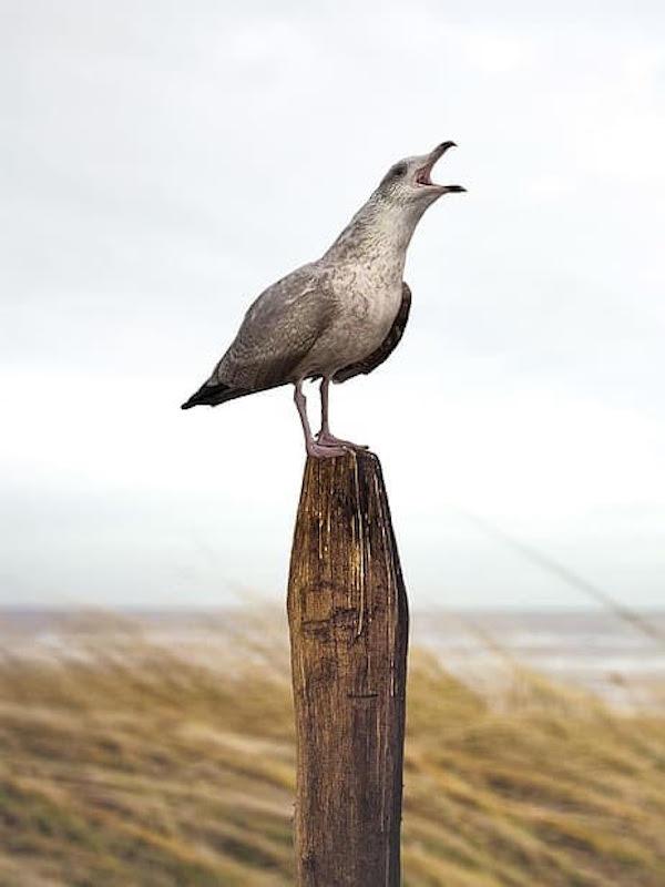 SEO/BirdLife: 67 años protegiendo a las aves