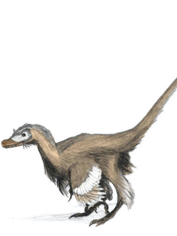 Shuvuuia, el mini-dinosaurio de la noche