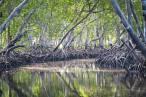 ¿Sabías que la naturaleza es una de las mejores defensas de la humanidad para adaptarse al calentamiento global?