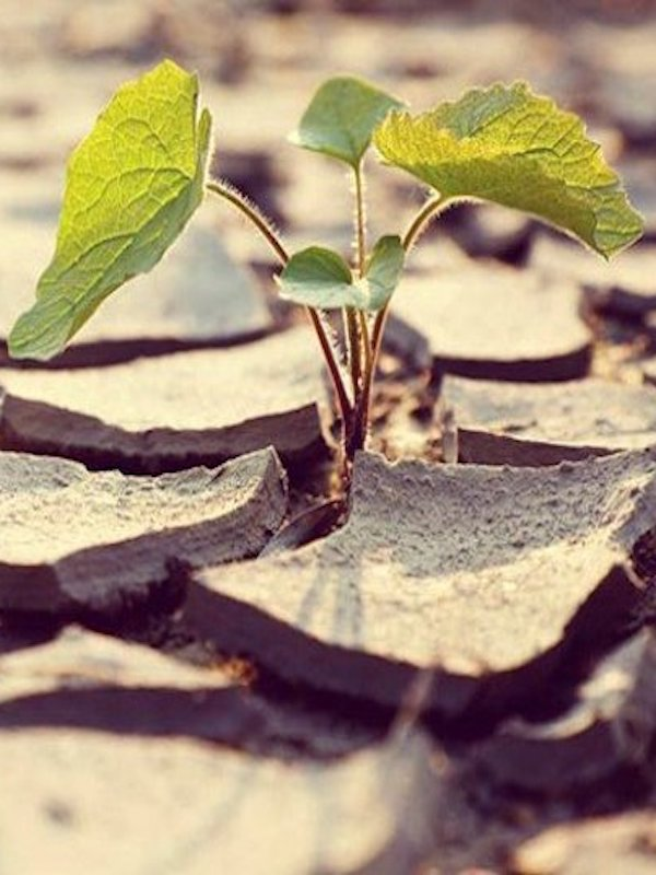 XII reunión del Diálogo de Petersberg sobre cambio climático