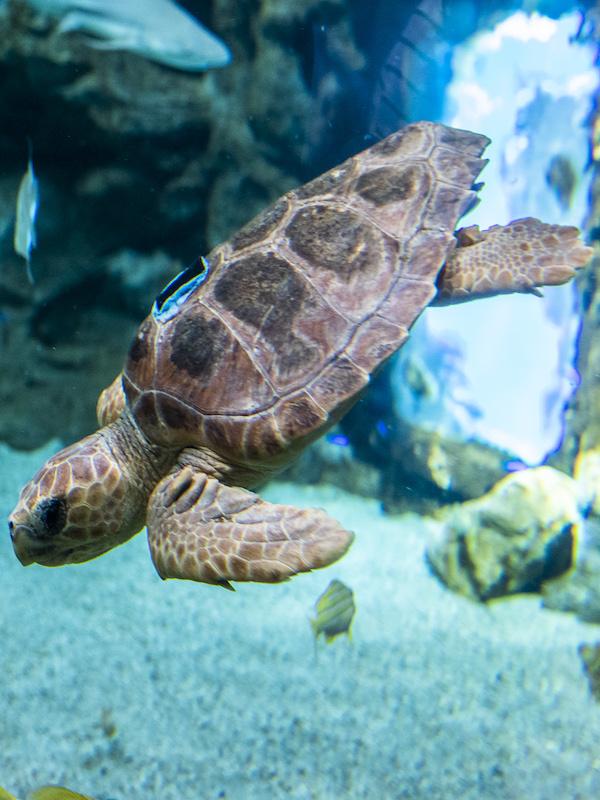 Fundación Biodiversidad arranca un curso de formación sobre marcaje de tortuga boba
